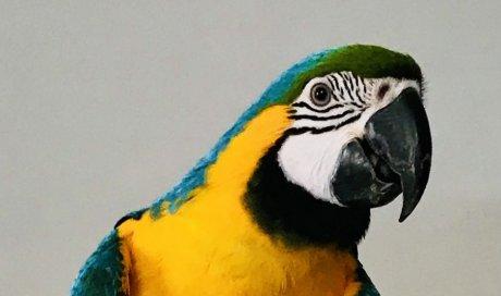 Consultation vétérinaire à domicile pour l' identification des animaux non domestiques, sur  Dijon et sa région
