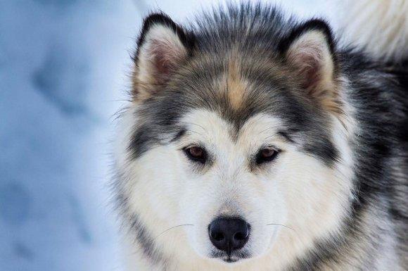 Vétérinaire à domicile pour le détartrage des dents de chien Dijon