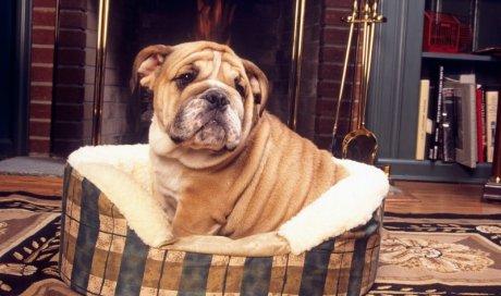 Vétérinaire pour consultation d'urgence à domicile pour chien malade Dijon