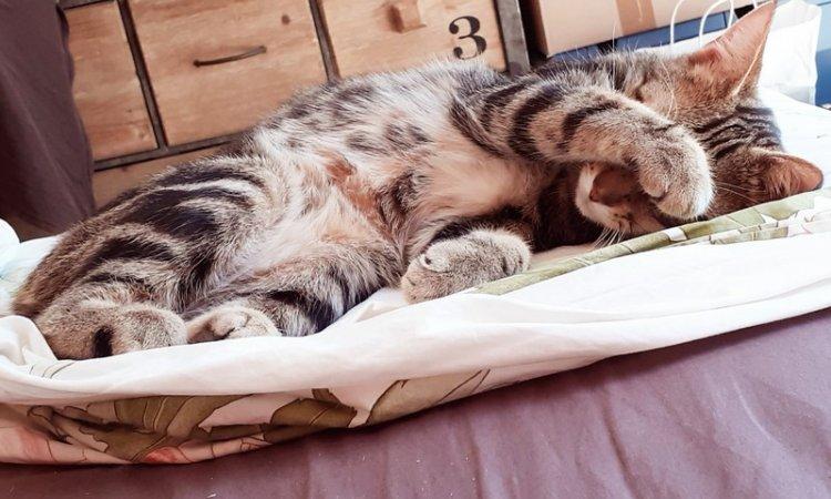 MOVING VET Traitements chats à domicile Dijon
